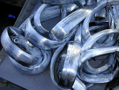 Spatola-Pesce sciabola
